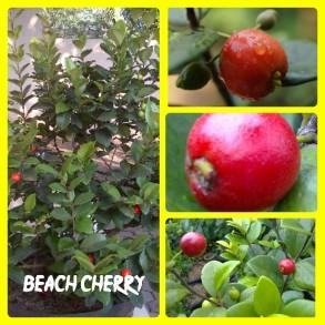 Cherry Beach
