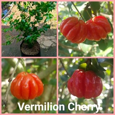 cherry vermilion