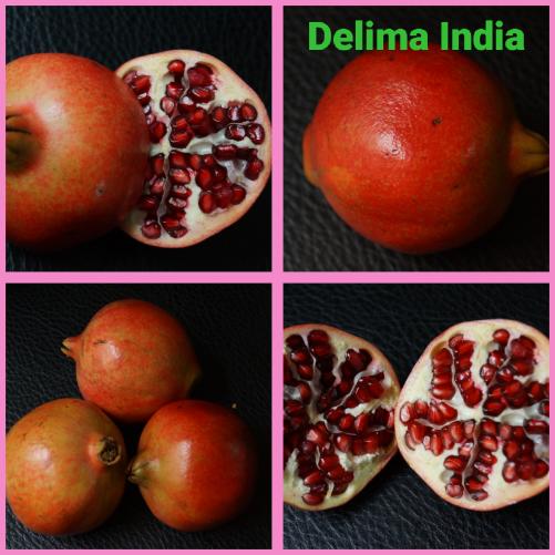Delima india