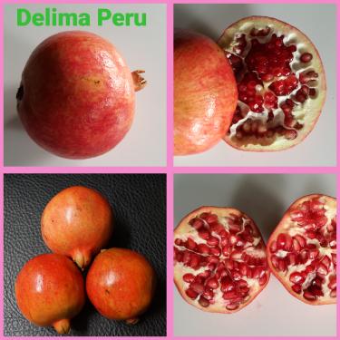 Delima Peru