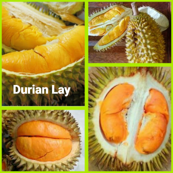 Durian Lay