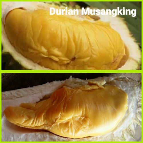 Durian Musangking
