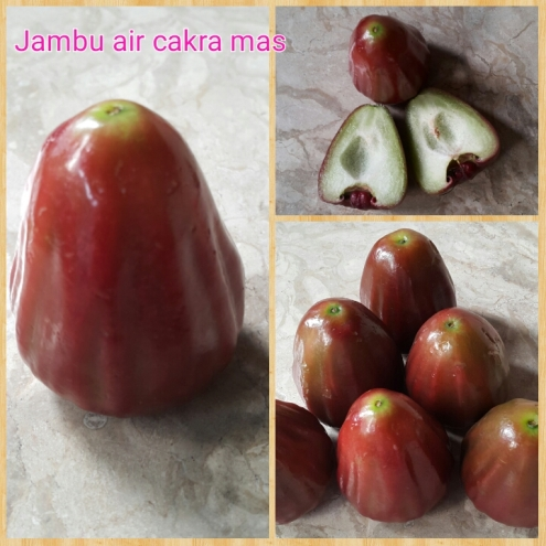 Jambu air cakra mas