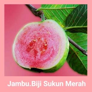 Jambu biji sukun merah