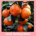 Jeruk santangmadu