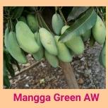 Mangga green aw