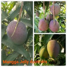 Mangga Jelly Australia