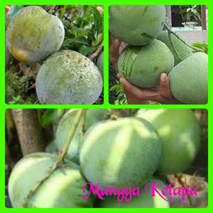 Mangga kelapa