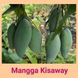 Mangga Kisaway