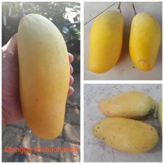 Mangga Mahachanok
