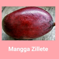 Mangga Zillete
