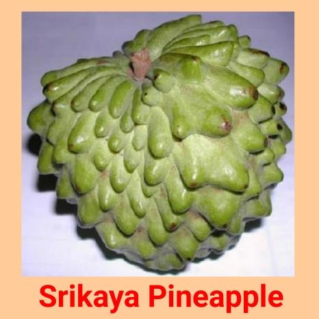 sk pineaple