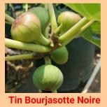 Tin Bourjasotte