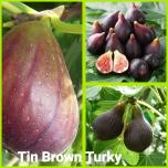 Tin brown turky