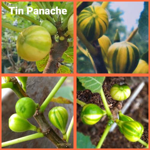 Tin Panache